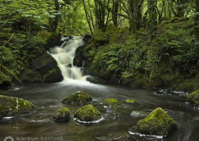 Cream Flow (Colly Brook, Dartmoor)