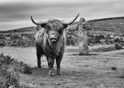 Highlander (Bennetts Cross, Dartmoor)