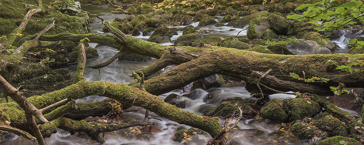 A long exposure landscape image of the River Plym showing moss covered boulders and fallen trees on the edge of Dartmoor in Dwerstone Woods in Devon.