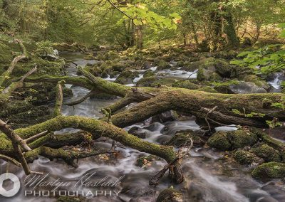 Sticks & Stones (River Plym, Dartmoor)